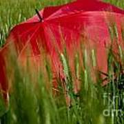 Red Umbrella On The Wheat Field Poster