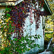 Red Vine Shed Poster