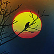 Red Winged Blackbird In The Sun Poster
