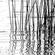 Reeds On The Turtle Flambeau Flowage Poster