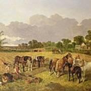 Resting Plough Team Poster