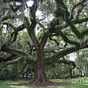 Resurrection Oak Poster