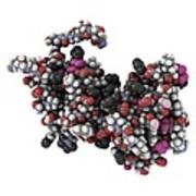 Rgs Domain Molecule Poster