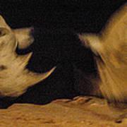 Rhino Clash Poster