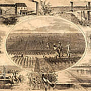 Rice Plantation, 1866 Poster