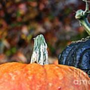 Rich Autumn Colors Poster