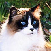 Rikki Blue Eyes Poster