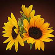 Ring Of Sunflowers Poster