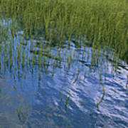 Rippling Water Among Aquatic Grasses Poster