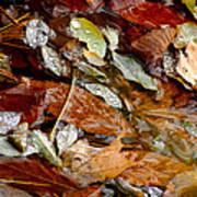 River Leaves Poster by LeeAnn McLaneGoetz McLaneGoetzStudioLLCcom
