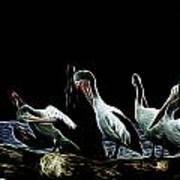 River Murray Pelicans Poster