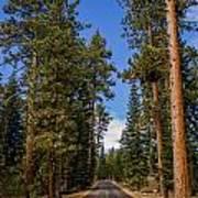 Road Through Lassen Forest Poster