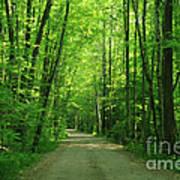 Road To Jasper Woods Poster