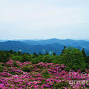 Roan Mountain Poster by Crystal Joy Photography