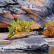 Rock Shrub And Bluff At Cumberland Falls State Park Poster