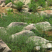 Rocks And Grass At Amidon Conservation Area Missouri Poster
