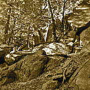 Rocks And Trees 2 Sepia Poster
