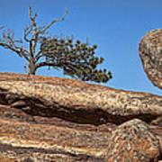 Rocky Tree Poster