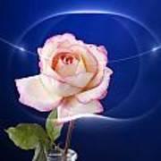 Romance Rose Poster by M K  Miller