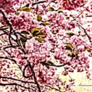 Romantic Cherry Blossoms Poster