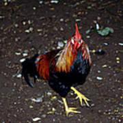 Rooster Strut Poster