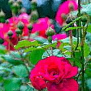 Rose 132 Poster