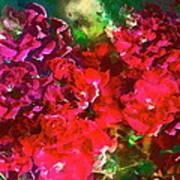 Rose 143 Poster by Pamela Cooper