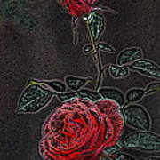 Rose 85 Poster