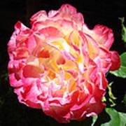 Rose Floral Fine Art Prints Pink Roses Flower Poster