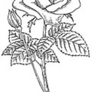 Rose, Lino Print Poster by Gary Hincks