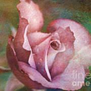 Rose Of Romance Poster