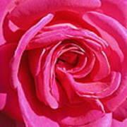 Rose Rose Poster