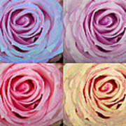Rose Spiral Colorful Mix Poster