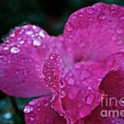 Rose Water Beads Poster