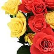 Roses Closeup Poster
