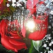Rosesredred Poster