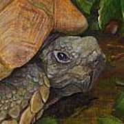 Rosie The Turtle Poster