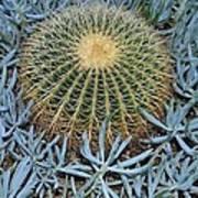 Round Cactus Poster