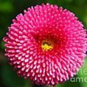 Round Pink Flower Poster