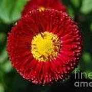 Round Red Flower Poster