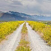 Ruby Mountains Wildflower Road Poster by Sheri Van Wert