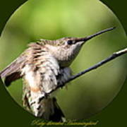 Ruby-throated Hummingbird  - The Stretch Poster