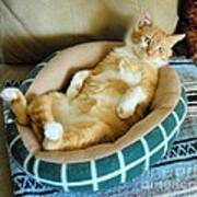 Rudy's Nap Time Poster by Cheryl Poland