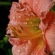 Ruffles And Rain Poster
