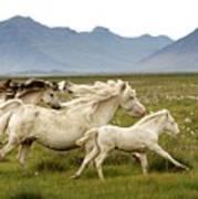 Running Wild In Iceland Poster