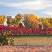 Rural Country Autumn Scenic View Poster