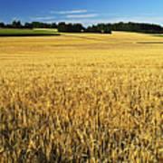 Rural Summer Scene Poster