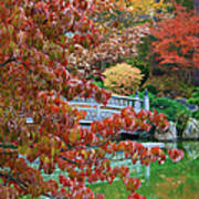Rust Colored Leaves Over Autumn Pond Poster