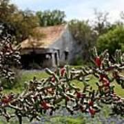 Rustic Cactus Abandoned Barn Poster