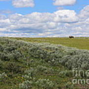 Sagebrush And Buffalo Poster